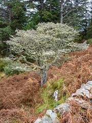 Autumn still life (Nelleke C) Tags: 2016 clifden boom connemara countygalway holiday ierland ireland railroadtrack tree vakantie