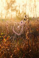 goldener Oktober (drummerwinger) Tags: rot spinnennetz spinne herbst canon700d 50 mmstm gaden