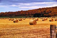 Ready to roll (Fr Paul Hackett) Tags: field stubble trees autumn sky bales