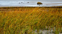 Sea Grass Fall Colors - Low Tide - Cape Cod (JohnColeUSA) Tags: coastal coast sea capecod lowtide ma mass fallcolors seagrass bay water