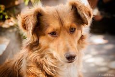 O melhor amigo do homem (Vanderli S. Ribeiro) Tags: cão dog melhoramigodohomem amigo olhar olhos eyes friend aoarlivre ruta237 argentina vanderlisr vanderlisribeiro nikon