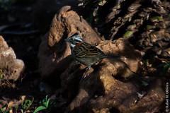 Freedom (Rafael.Photografia) Tags: passaro bird fly liberdade freedom colourful cores natureza nature