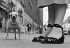 """Elliott Erwitt - """"USA. New York City. 1946."""" (ryangeoffroy) Tags: americas amériquedunord animal animaldomestique artscultureandentertainment candidphotography chaussure chien chihuahua closeup couleurgris dog extérieur exterior fashionall father féminin femme25à45ans foot fulllength globalholidays grey grosplan groupofpeople groupe humanfoot iconicpicture joieexpression joy langue lifestyleandleisure mammal mammifère manallages masculin matureadult mère midadult mode mother newyork newyorkcity newyorkcityall newyorkcityentier nofaces northamerica père pet photography pied processed pullover qualitycontrolrequired rue sandal sandale shoe street streetview thematicpictures tongue transport trust typehumainblanc unitedstates unitedstatesofamerica unrecognisable urbanroute voieurbaine white whiteethnicity woman woman25to45years womanallages"""