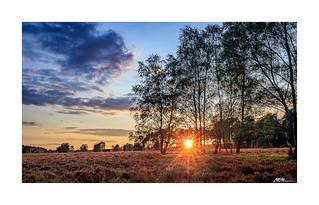 Sunset Heideblüte