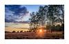 Sunset Heideblüte (mmsig) Tags: rot lünebugerheide heideblüte sonne himmel wolken canoneos80d langzeitbelichtung hdr sonnenuntergang orange violett rosa niedersachsen landschaft farbe heatherbloom color sun sunset summer sommer bloom