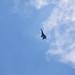 Майбутні аси Повітряних Сил приборкують винищувачі
