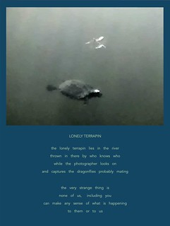 LONELY TERRAPIN