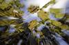 Wine (kobianda) Tags: wine leaf leaves bluesky zoom zooming chaos fallingapart autumn fall southmoravia grapes speed
