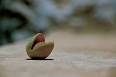 almond (eva.pave) Tags: nature almond food seed dof bokeh minimalism