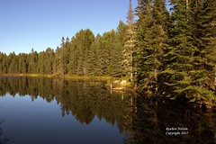 Algonquin Tree reflection (rcss2800) Tags: park tree trees water reflection outdoors calm clear refreshing beautiful landscape serene wood forest lake sky mountain
