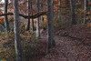 Echo Lake Park (adamwilliams4405) Tags: leaves fall fallcolors richmond rva richmondva landscapes canon va nature loveva photography outside colors virginia visitrichmond visitvirginia tones trees