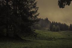 Moments of Contemplation (Netsrak) Tags: bäume oberstdorf bayern grün nebel regen