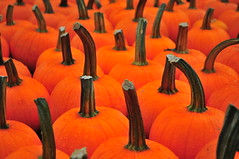 Terhune Orchards: Pumpkins (Triborough) Tags: nj newjersey mercercounty princetontownship princeton terhuneorchards