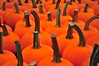 Terhune Orchards: Pumpkins (Triborough) Tags: nj newjersey mercercounty princetontownship princeton terhuneorchards