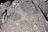Porphyritic rhyodacite (Holocene; Chaos Jumbles Landslide, Lassen Volcano National Park, California, USA) 8 (James St. John) Tags: rhyodacite chaos jumbles holocene landslide avalanche lassen volcano volcanic national park california