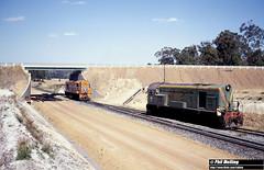 2603 F45 R1905 Worsley 15 December 1981 (RailWA) Tags: railwa philmelling westrail 1981 f45 r1905 worsley