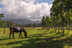 'No Country for Old Men' (JEMiguel007) Tags: horse kauai mountain distance sun