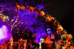 enter at your own risk.... (Little Hand Images) Tags: pumpkins arch spooky eerie treeswithpumpkins night universalhalloween2017 halloweenhorrornights orlando florida orange purple noflash