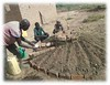 2017 raised bed vegetable garden training 2 (Foods Resource Bank) Tags: frb world renew humanitarian charity food security water conservation agriculture farmers vegetables crops maize raised bed garden mulching soil improvement cassave income protein animals disaster risk reduction drought flooding community training small business bricks
