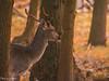 20171014-DSC_0612 (M van Oosterhout) Tags: amsterdamse waterleiding duine natuur nature flora fauna landschap landscape dutch holland amsterdam nederland netherlands animals