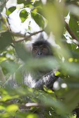 DSC_5516 (Almixnuts) Tags: kualaselangor nature naturepark kualaselangornaturepark
