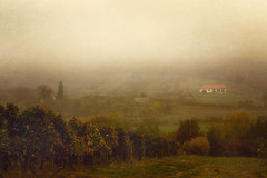 Vinery in autumn (RobertFenyo) Tags: nature landscape autumn mood