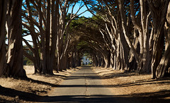 Point Reyes North Station (KC Mike Day) Tags: pointreyes station rca building california northern tunnel trees road seashore national