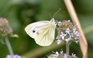 Butterfly and bokeh.