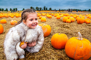 Selecting a pumpkin