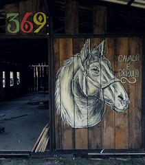 Cavalo é crioulo (Marcos D. Torres) Tags: indoor painting mural paint pintura pintor art artist draw drawing desenho design pen pencil marker spray spraycan paper doodle rabisco rascunho exercise sketch sketchbook caderno outdoor black white yellow orange purple blue red green colorfull pb bw wood glass metal face portrait type letter typography profile hand skull animal burguer hamburguer pizza bird swarm bee flower tipografia awesome neat faith character horse tank war kush flow vibes good amazing bitch rat coke wheatpaste paste up
