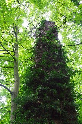 Chimney of Ivy