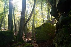 Rocks and forest and sun (martinstelbrink) Tags: devilsgorge teufelsschlucht ernzen rheinlandpfalz germany eifel südeifel forest wald autumn herbst sony alpha7rii a7rii voigtländervmeclosefocusadapter leicasummicron35mmf20preasph leicasummicron35mmf20i leica summicron 35mm f20 preasph deutschluxemburgischernaturpark germanluxembourgnaturepark