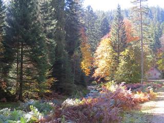 Herbst an der Eyach (Schwarzwald)