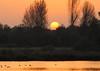 IMG_5867  Sunset (dwarren16011) Tags: fishers green walthamabbey essex