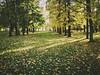 Autumn #Trees #tumbrl #goodweather #love 💮💕🍁 (ievaŽalnieraitytė) Tags: tumbrl love goodweather trees