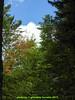 abetone (giordano torretta alias giokappadue) Tags: abetone bosco montagna