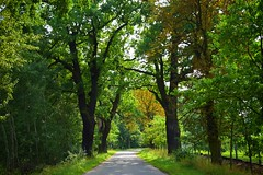 summer moods (JoannaRB2009) Tags: summer mood tree trees oak oaks path road sunlight sunlit dolinabaryczy dolnyśląsk lowersilesia polska poland green nature
