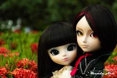 Capítulo 136 (Mundo Ara) Tags: pullip taeyang doll groove kain midori