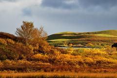 Autumn in Myvatn (_Amritash_) Tags: myvatn lake landscape travel iceland autumn autumniniceland fallseason trees colorsofnature catchycolors