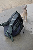 Watch my rucksack for me, will you? (SteveInLeighton's Photos) Tags: september 2017 japan bunny feral rabbit mammals okunoshima rabbitisland rucksack