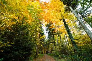 L'automne raconte