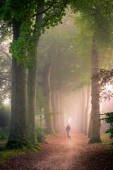 Early morning walk...