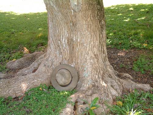 Cordia subcordata tree