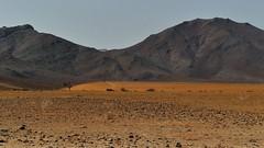auf dem Weg nach Solitaire (marionkaminski) Tags: namibia solitaire landscape paisaje paysage mountain montana montagne felder wüste desert desierto fields panasonic lumixfz1000