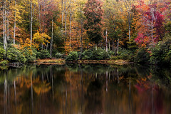 Reflection (lightonthewater) Tags: blueridgeparkway reflection trees lake leaves fall fallleaves fallfoliage northcarolina rhododendron treetrunks