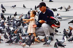 Feeding the pidgeons with Daddy (Dan Steeves) Tags: pidgeons feeding child