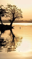 Tranquil  ... (Hazem Hafez) Tags: nile river sun sunset gold yellow reflection tree silhouette soft delicate water quiet calm serenity