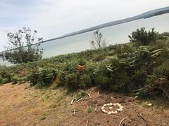 WBP3_238 (EthanPDX) Tags: wfis woodbeads brownsea island