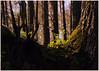 DSC_6611 copy (FMAG) Tags: kpn kampinoskiparknarodowy polska poland wiosna spring