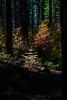 Yosemite Fall Dogwoods II (Jeffrey Sullivan) Tags: dogwood trees fall colors yosemite national park california usa night landscape nature photography canon eos 5dmarkiii jeffsullivan photo copyright october 2012 jeff sullivan